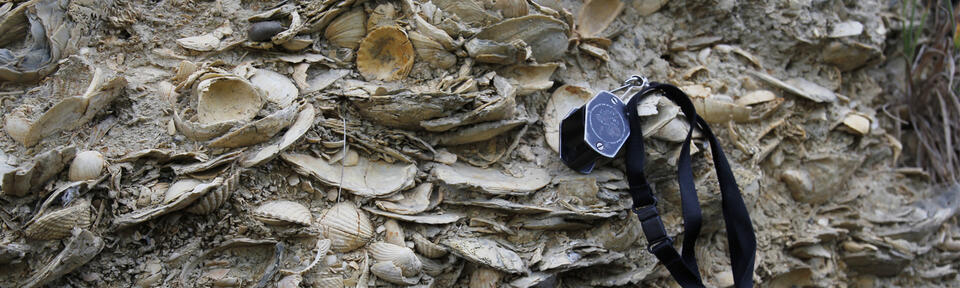 The photo shows 2 million years old fossils found in New Zealand. Photo: Kjetil Lysne Voje